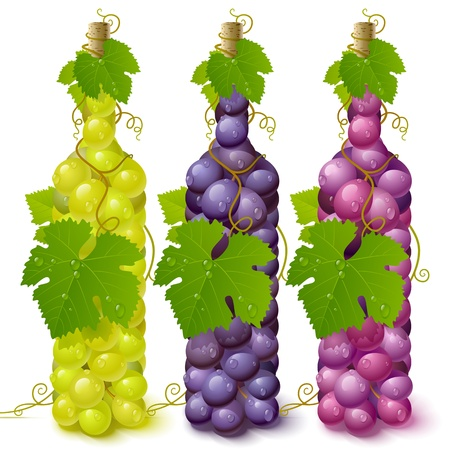 Vine grape bottles Stock Vector - 12477228
