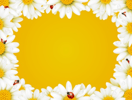 Vector camomile frame and ladybugs
