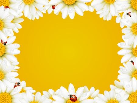 Vector marco de manzanilla y mariquitas