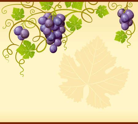 uvas: Vector marco de uva