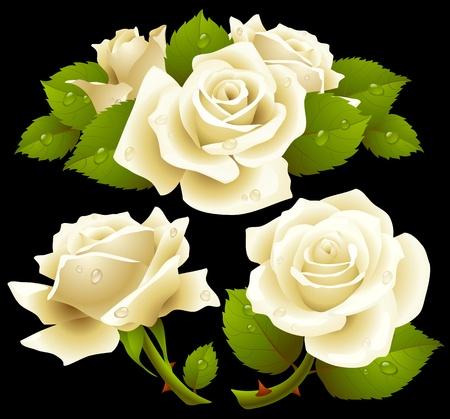 White roses set Vector