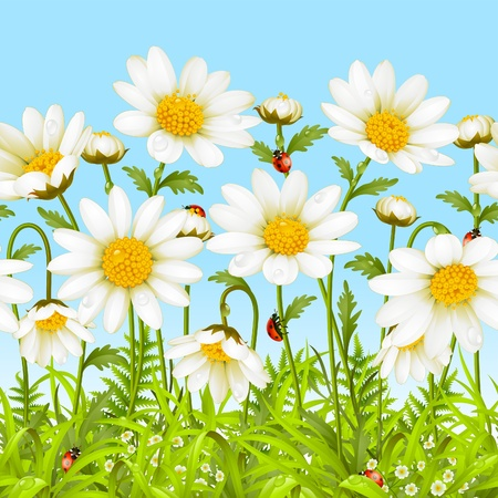 bottom line: Vector seamless horizontal background with camomile. White flower and green grass.