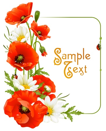 camomile flower: Vector flower frame 8. Poppy and Camomile