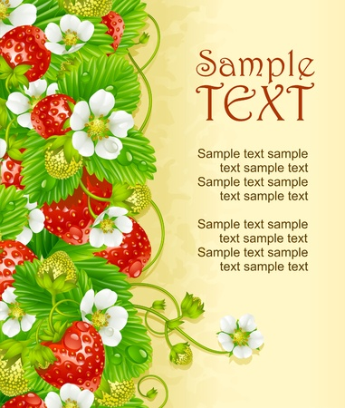 vertical garden: Vector strawberry frame. Red berry and white flower