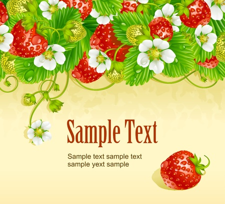 Vector strawberry frame. Red berry and white flower