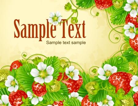 Vector aardbei frame. Rode bes en witte bloem Stockfoto - 12796749
