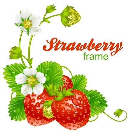 strawberry frame. Red berry and white flower isolated on background