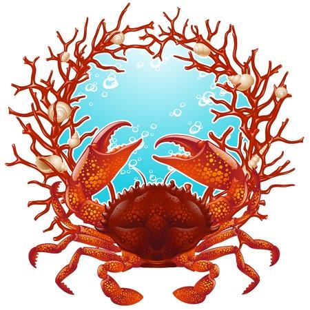 cangrejo: Cangrejo, conchas y coral rojo marco
