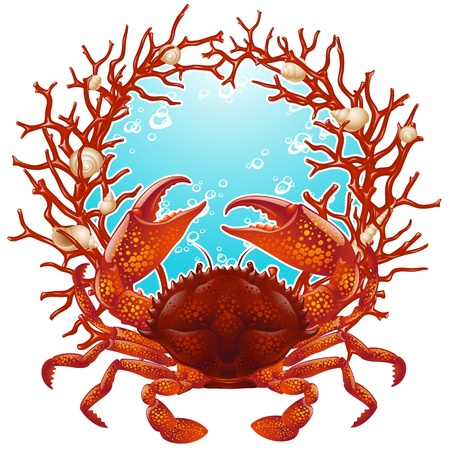 Crab, seashells and red coral frame