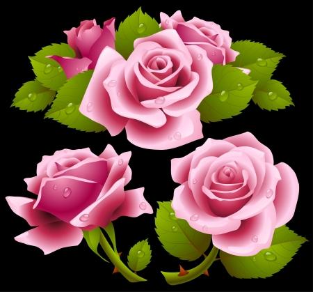 핑크 장미 세트 일러스트