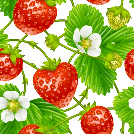 plant sweet: Vector strawberry seamless pattern isolated on white background