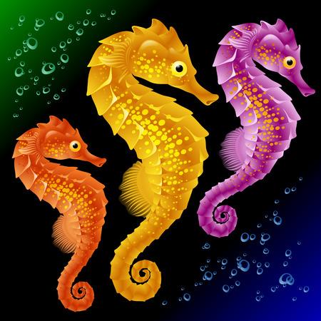 Vector Seahorses Illustration