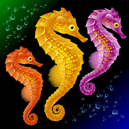 horsefish: Vector Los caballitos de mar Vectores