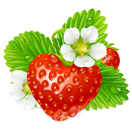 edible: Vector strawberry in the shape of heart and white flowers