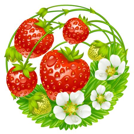 mermelada: Vector de fresa ronda de composición aislada en el fondo blanco Vectores