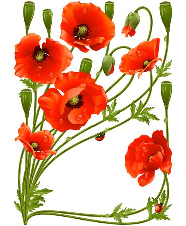 poppy: Marco del vector con las amapolas rojas y mariquita