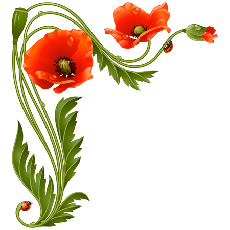 poppy: Modelo de la esquina del vector con las amapolas rojas y mariquita