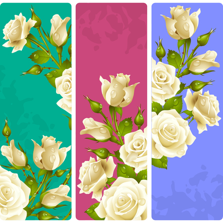 bunch of flowers: White Rose frames. Vector set of floral vertical banners Illustration