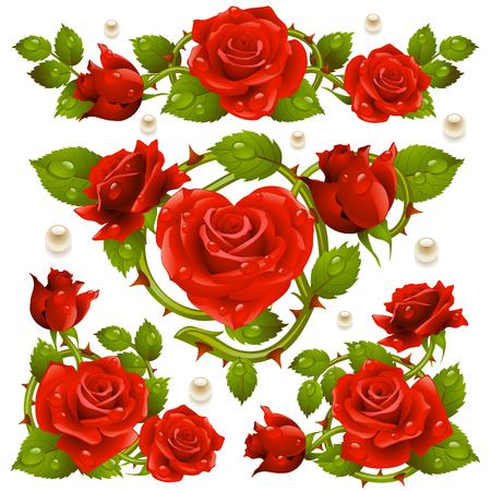 Vector Red Rose design elements isolated on white background Ilustração