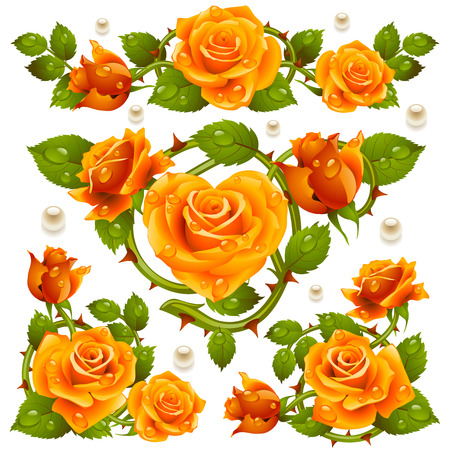 Vector yellow Rose design elements isolated on white background