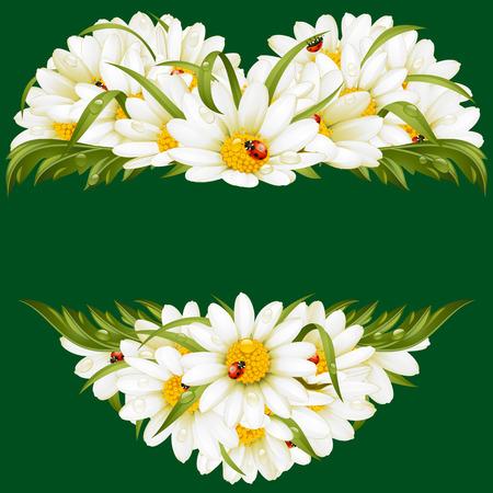 Vector chamomile frame in the shape of heart Illustration