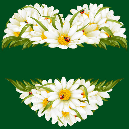 oxeye: Vector chamomile frame in the shape of heart Illustration