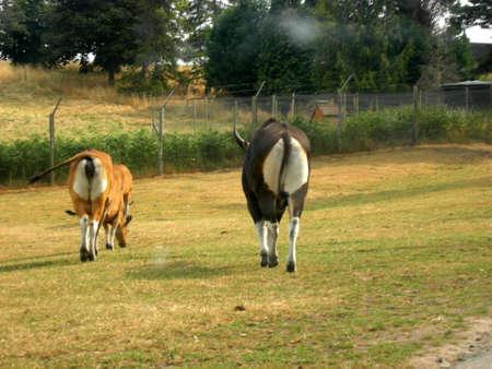 rear end: animal safari, ass, mammal,nature,rear end,