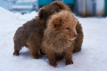 Stray puppies outside in the winter in the snow.