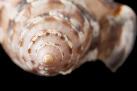 Sea shell isolated on black background. Close-up. Stock Photo
