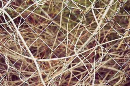 Fence of the metal mesh closeup. Behind the fence is dry grass. Abstract background.
