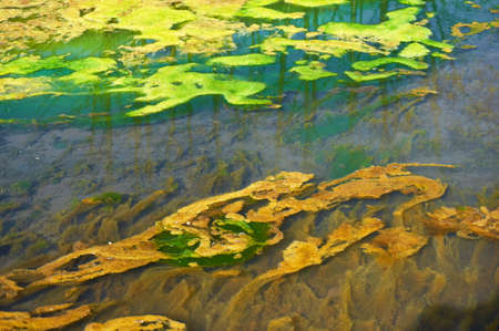 Green and orange algae on the river. Environmental pollution. Stock Photo