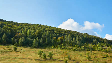 Forest and mountains with blue sky. Forest conservation area. Reklamní fotografie