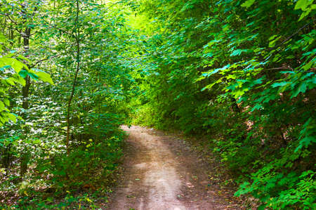 Pathway in a green forest. Forest conservation area. Natural Park.