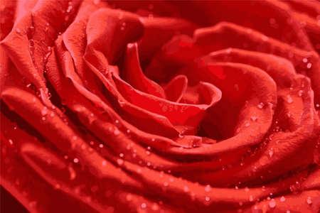 Rote Rose Nahaufnahme mit Tautropfen. Abstrakter Hintergrund. Vektorgrafik