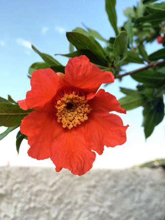 Beautiful Orange Flower Stock Photo