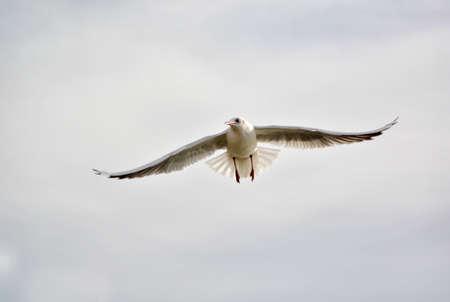 white bird: White Bird Flying On Sky