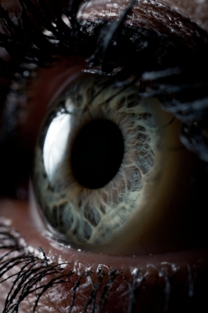 beautiful female eye close-up. macro picture of the human eye photo