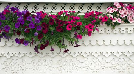 window sill: beautiful flowers on a wooden window sill