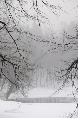 scour: Beautiful small pond in the winter foggy forest