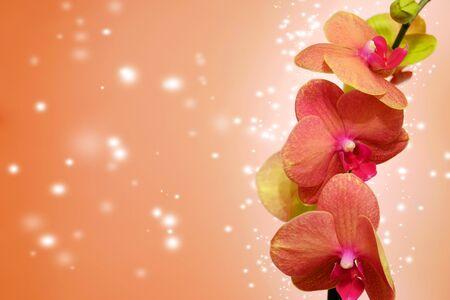 backdop: Orange orchid on orange backgorund. Photo beautiful flower Stock Photo