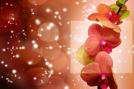 backdop: Orange orchid on orabackgorund. Photo beautiful flower.