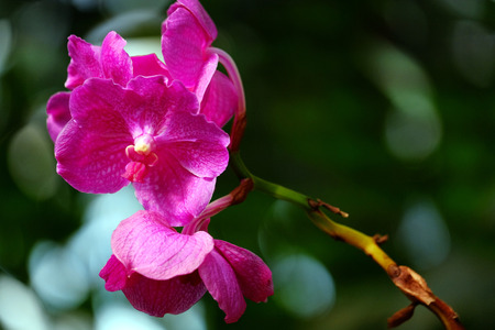 backdop: Purple orchid on blurred background. Photo beautiful flower.