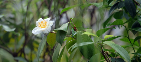 backdop: Beautiful white flower on a tree with a blurred background