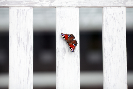 Beautiful butterfly on a white board and a blurred background