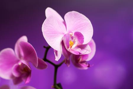 Beautiful orchid on violet backgorund. Photo beautiful flower Stock Photo