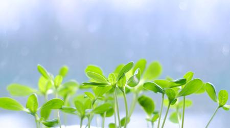 Petite plante verte pousse sur un arrière-plan flou
