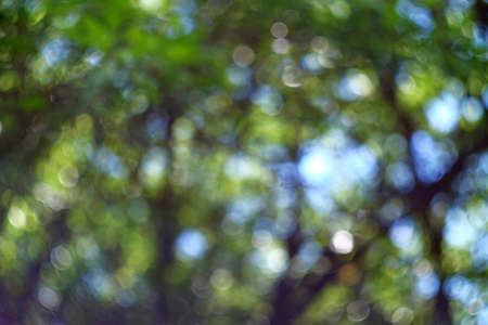 Photo of a beautiful summer bokeh. Background with a bokeh of trees
