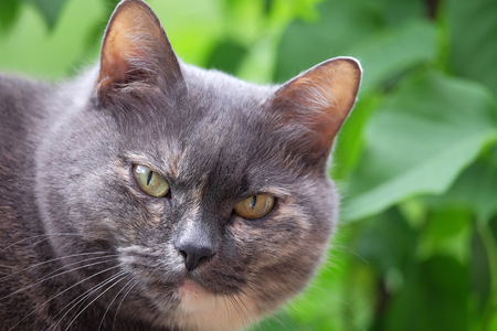 Gray cat close up on a blurred background Stock Photo