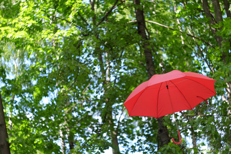 Red umbrella on a background of green trees