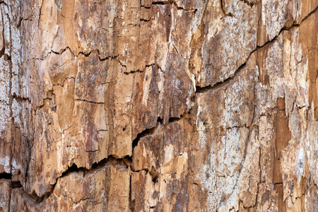 Beautiful background with the texture of an old wood